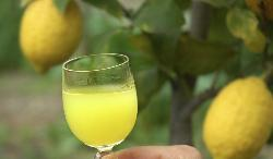 Small glass of lemon liqueur