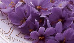 fiori di zafferano